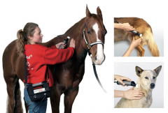 marhythe-behandlung_veterinaer